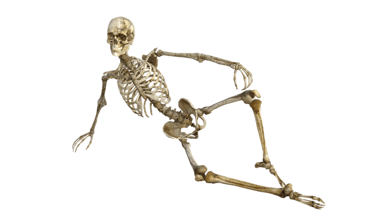 Skeleton-lounger